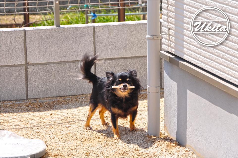 高槻市 工務店 新築・建替え・平屋のこだわりの家犬のお気に入りの場所